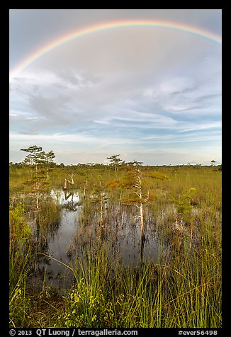 Rainbow over dwarf cypress grove. Everglades National Park (color)