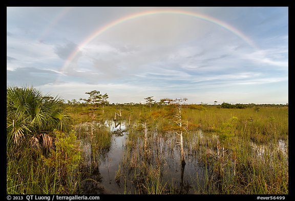 Double rainbow over dwarf cypress forest. Everglades National Park (color)