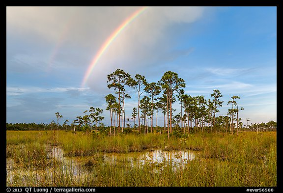 Rainbow over pine trees near Mahogany Hammock. Everglades National Park (color)