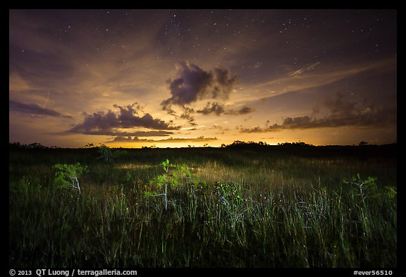 Sawgrass and dwarf cypress at night. Everglades National Park (color)