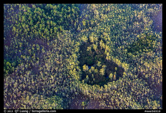 Aerial view of a cypress hole. Everglades National Park (color)