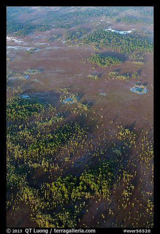 Aerial view of cypress and pines. Everglades National Park (color)