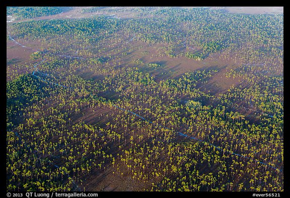 Aerial view of pine forest. Everglades National Park (color)