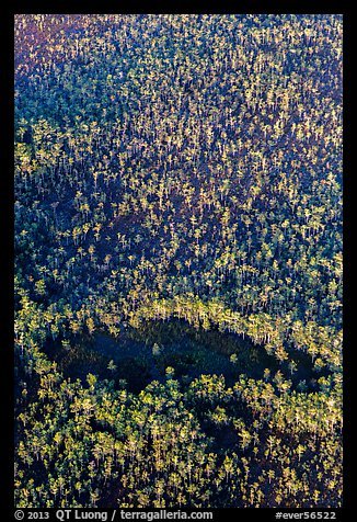Aerial view of cypress forest. Everglades National Park (color)