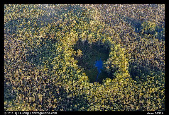 Aerial view of cypress hole. Everglades National Park (color)