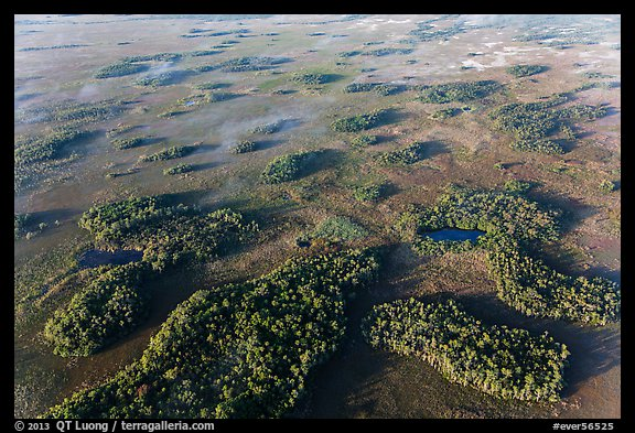 Aerial view of hammocks and fog. Everglades National Park (color)