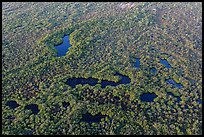 Aerial view of mangroves and ponds. Everglades National Park, Florida, USA. (color)