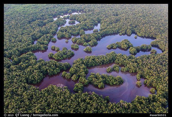 Aerial view of mangrove forest mixed with ponds. Everglades National Park (color)