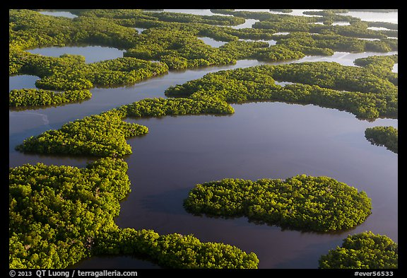 Aerial view of maze of waterways and mangrove islands. Everglades National Park (color)