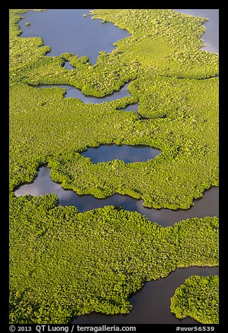 Aerial view of coastal mangrove forests. Everglades National Park (color)