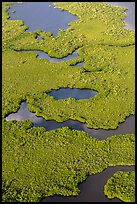 Aerial view of coastal mangrove forests. Everglades National Park, Florida, USA. (color)