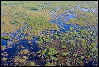 Aerial view of saltwater marsh. Everglades National Park, Florida, USA. (color)