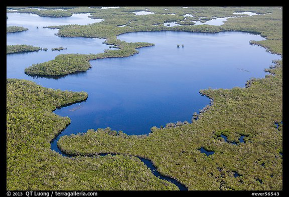 Aerial view of mangrove-fringed lake. Everglades National Park (color)