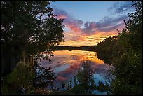 Paurotis Pond at sunset. Everglades National Park ( color)