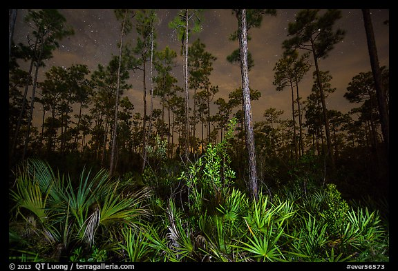 Palmeto and pines at night. Everglades National Park (color)