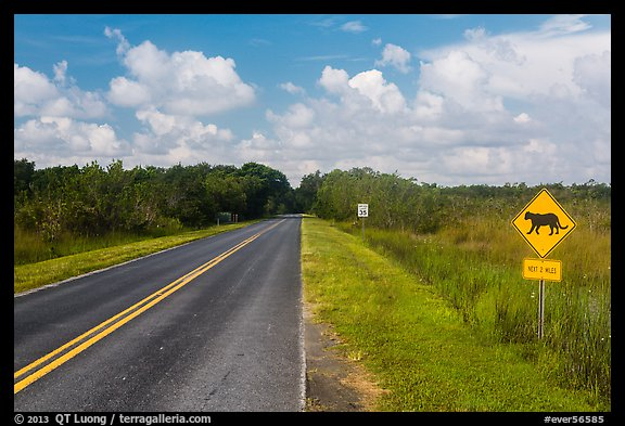 Road with Florida Panther sign. Everglades National Park (color)