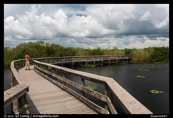 Park visitor looking, Anhinga Trail. Everglades National Park (color)