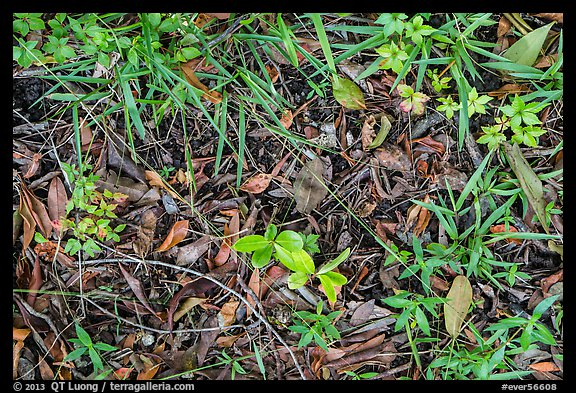 Ground close-up, hammock. Everglades National Park (color)