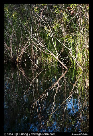 Branches and reflections, Shark Valley. Everglades National Park (color)