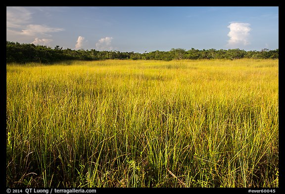 Prairie and hammocks, Shark Valley. Everglades National Park (color)