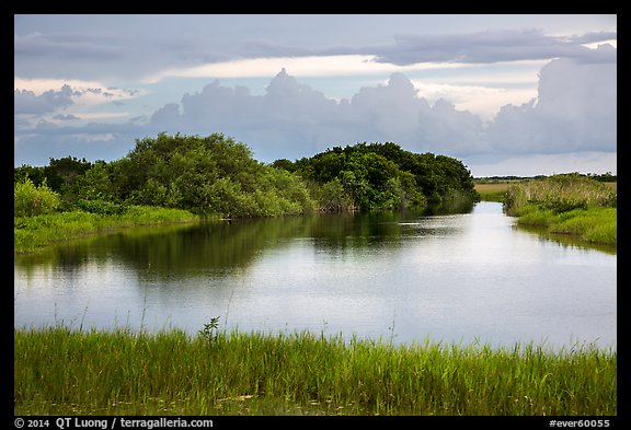 Pond, sawgrass prairie, and hammock, Shark Valley. Everglades National Park (color)