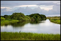 Pond, sawgrass prairie, and hammock, Shark Valley. Everglades National Park ( color)
