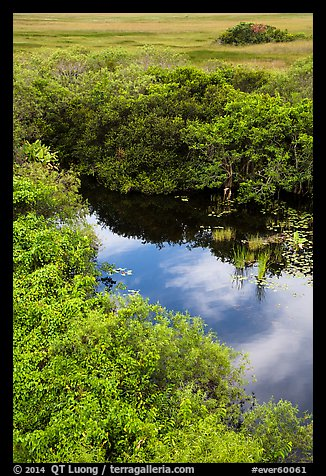 Pond from above, Shark Valley. Everglades National Park (color)