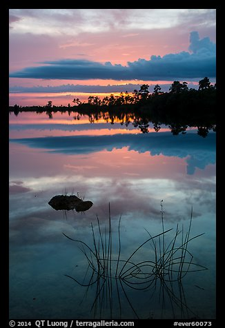 Reeds and pine trees at sunset, Pines Glades Lake. Everglades National Park (color)