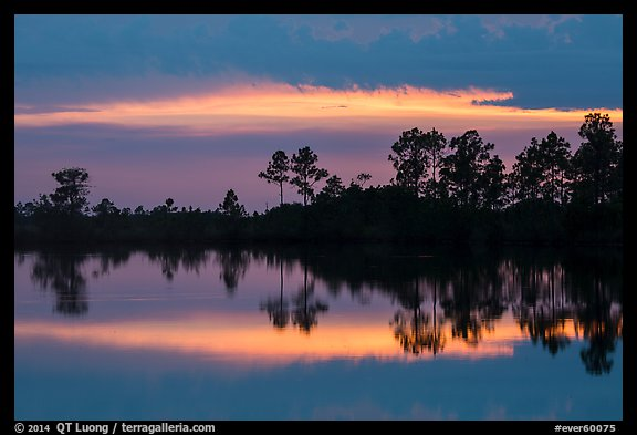 Pines reflected at sunset, Pines Glades Lake. Everglades National Park (color)