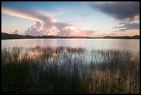 Reeds and Nine-Mile Pond, sunrise. Everglades National Park ( color)