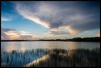 Nine-Mile Pond at sunrise. Everglades National Park ( color)