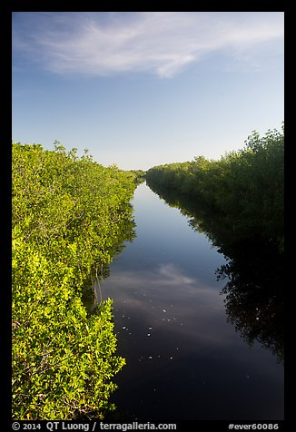 Canal lined up with mangroves. Everglades National Park (color)