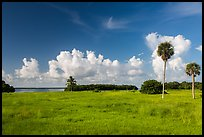 Coastal prairie, Flamingo. Everglades National Park ( color)