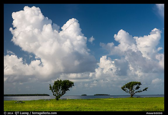 Trees, Florida Bay, and clouds. Everglades National Park (color)