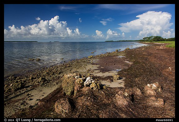 Florida Bay shores. Everglades National Park (color)