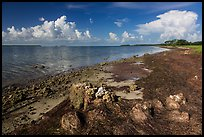 Florida Bay shores. Everglades National Park ( color)