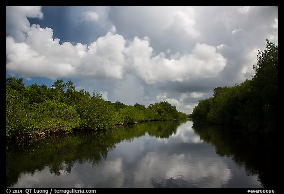 Buttonwood Canal and rain clouds. Everglades National Park (color)