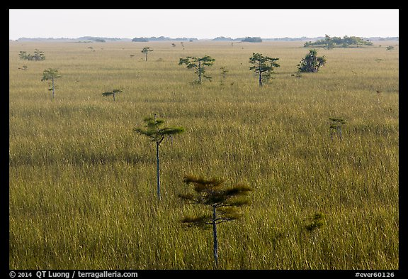 Freshwater prairie punctuated by cypress at sunrise. Everglades National Park (color)