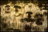 Dwarf mangroves silhouettes. Everglades National Park ( color)