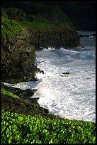 Waves and cliffs at Kipahulu, morning. Haleakala National Park, Hawaii, USA.