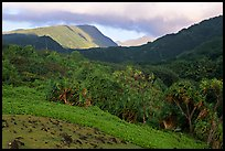 Lush Kipahulu mountains. Haleakala National Park, Hawaii, USA. (color)