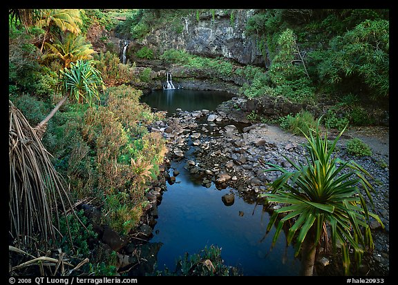 Oho o Stream, sunrise. Haleakala National Park (color)