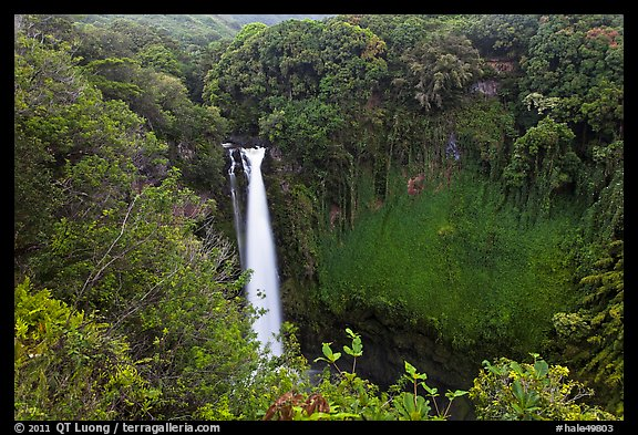 Makahiku falls plunging off a lush, green cliff. Haleakala National Park (color)