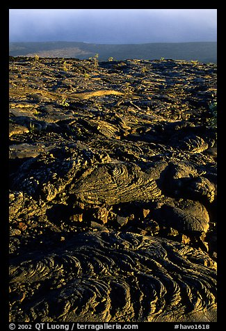 Hardened lava flow and Kaena Point. Hawaii Volcanoes National Park (color)