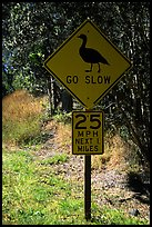 Road sign showing the nene (Hawaiian goose). Hawaii Volcanoes National Park, Hawaii, USA. (color)