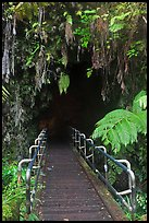 Boardwalk and entrance of Thurston lava tube. Hawaii Volcanoes National Park, Hawaii, USA. (color)