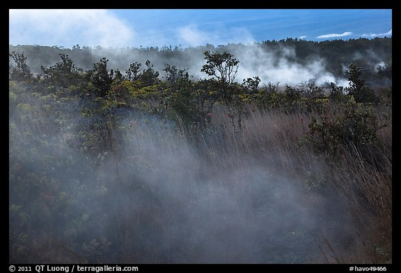 Steam vents. Hawaii Volcanoes National Park (color)