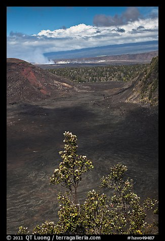 Kilauea Iki Crater, Halemaumau plume, and Mauma Loa. Hawaii Volcanoes National Park (color)