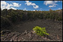Lua Manu crater. Hawaii Volcanoes National Park, Hawaii, USA. (color)