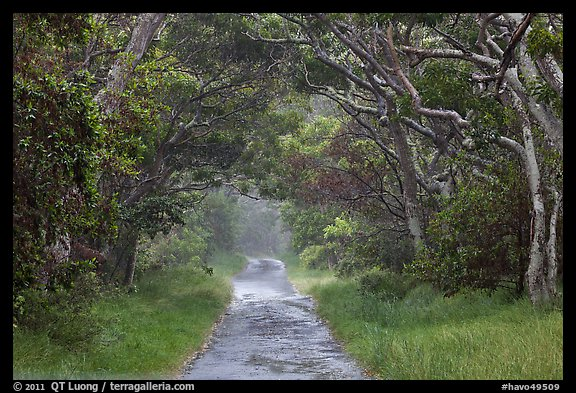 Mauna Load Road. Hawaii Volcanoes National Park (color)
